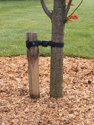 types of stakes for planting trees how tos diy