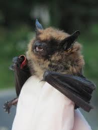 small bat why are bats associated with sycamore land trust