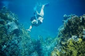 Pennsylvania snorkeling images Snorkeling in fort meyers jpg