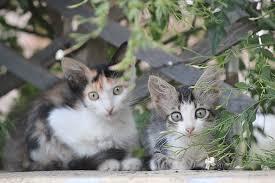 beautiful kittens kittens cats beautiful free photo on pixabay