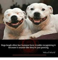 Frowning Dog Meme - 25 best memes about dog laughing dog laughing memes