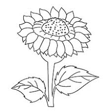 15 Beautiful Sunflower Coloring Pages For Your Little Girl Sunflower Coloring Page