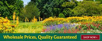 wholesale flowers k bourgondien sons wholesale flower bulbs and perennials