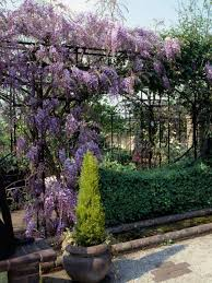 garden supports for climbing plants 8 best garden design ideas