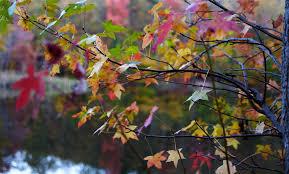 file autumn tree leaf colors bokeh lake west virginia