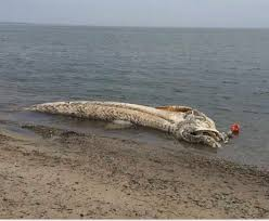 look at what washed ashore on cape cod album on imgur