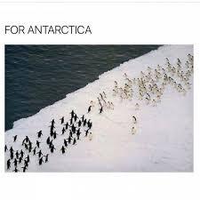 Meme Penguin - for antarctica penguin meme