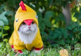 Halloween Costume Cat 105 Halloween Cat Costumes Smile