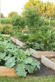 best 25 vegetable garden mulch ideas on pinterest composters