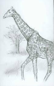 giraffe sketch feng shui house things to draw pinterest