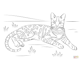 brown spotted tabby bengal cat coloring page free printable