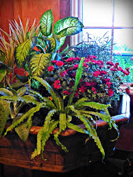 respect your houseplants state by state gardening web articles