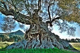 l albero di pandora pandora s tree escube flickr