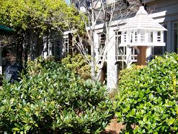 the gardens of the bob timberlake gallery lexington nc