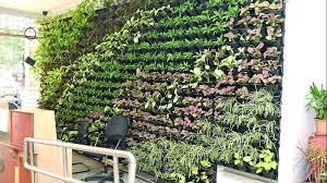 ghmc drive plants u0027up the wall u0027 to go green