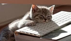 Sleeping Cat Meme - sleeping cat blank template imgflip