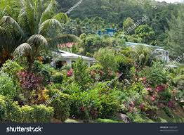 pictures of beautiful gardens with flowers houses seychelles surrounded by beautiful gardens stock photo