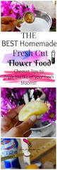 Homemade Plant Food by Best Homemade Fresh Cut Flower Food Plus Tips On Why It Works