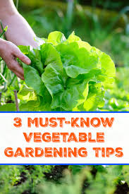 3 must know vegetable gardening tips
