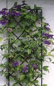 10 easy pieces garden trellis panels wall trellis gardens and