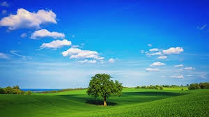 Amazing Pictures Of Nature by Superb Natural Green Park Green Twisted Black Background