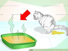 My Cat Peed On My Bed How To Keep Your Cat From Where It Shouldn U0027t