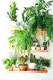 plantes d駱olluantes chambre plantes depolluantes chambre a coucher plante depolluante plante