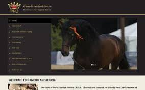 Black Mustang Ranch Pilot Point Texas Pilot Point Texas Horse Stables And Horse Farms Directory O Horse