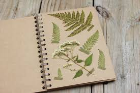 native plants natural areas notebook the dainty squid plant pressing tips nature study homeschool