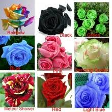 roses colors buy green colored roses and get free shipping on aliexpress