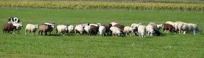 wisconsin sheep u0026 wool festival