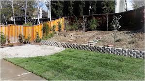 backyard ground cover ideas backyard fence ideas