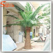 new products all kinds of palm ornametal palm tree canada