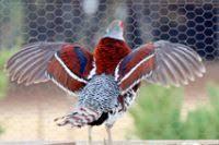 bird farm bird hatchery breeders and suppliers of
