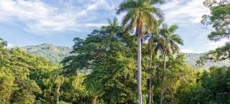 palm tree 101 doityourself com