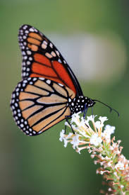 event ideas for a butterfly release