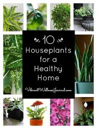 indor plants 10 best indoor plants for a healthy home