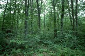 Georgia forest images Georgia forest by jacksparrow130 jpg