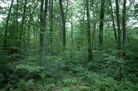 Georgia forest by jacksparrow130