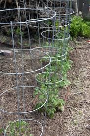 peas garden mantra