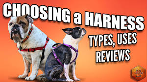 Four Paws Comfort Control Harness Choosing A Dog Harness Best Ones And How To Use Youtube