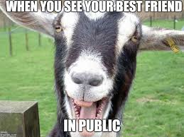 Funny Friend Memes - funny goat memes imgflip