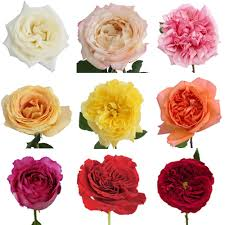 Wholesale Peonies Budgets U0026 Flower Availability U2014 Marlipaige Floral Designs