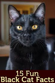 455 best black cats images on pinterest black cats animals and