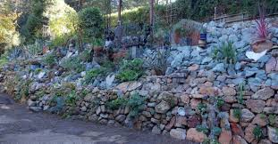Succulent Rock Garden by A Succulent Wall Like No Other Gardening Tips For The Santa Cruz