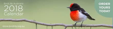 The Backyard Bird Company - welcome to birds in backyards birds in backyards