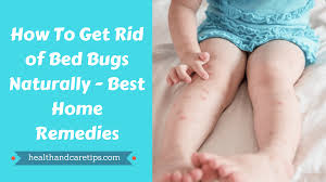 What Kills Bed Bugs Naturally How To Get Rid Of Bed Bugs Naturally Best Home Remedies