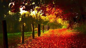 autumn red wallpaper autumn nature 56 wallpapers u2013 hd wallpapers