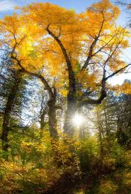 6 tips for shooting fall color digital photography review