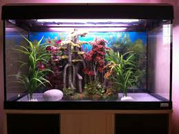 Fluval 125 Cabinet Se England Fluval Roma 125 Fish Tank More Reptile Forums